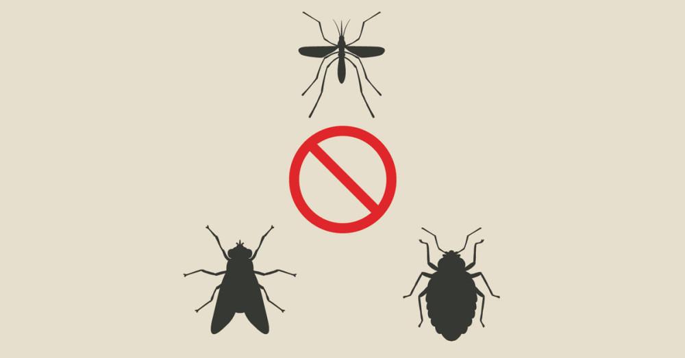 E-book eliminare insetti dai locali